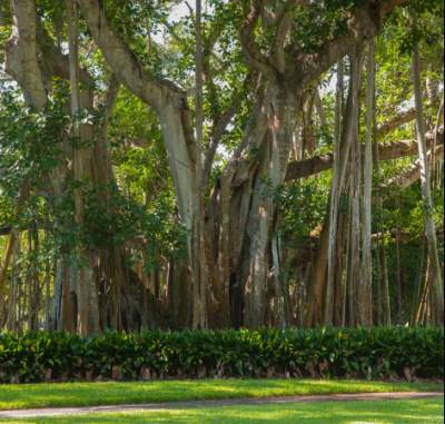 Arborist Tours at Ringling Museum, Our Town Sarasota News Events