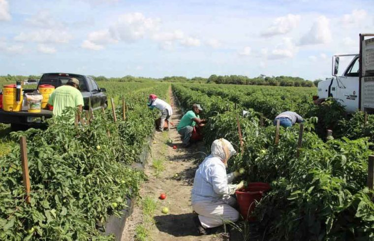 Florida Growers Stand to Lose Millions, Our Town Sarasota News Events