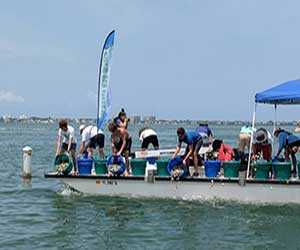 Sarasota Bay Watch Replenishes Clams and Scallops, Our Town Sarasota News Events