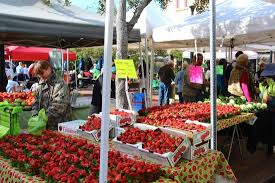 Sarasota Farmers Market Opens, Our Town Sarasota News Events