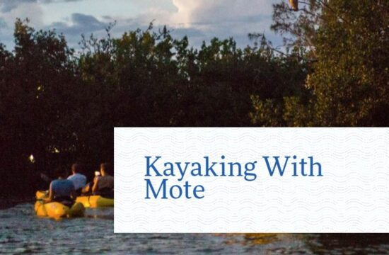 Kayaking with Mote Marine, Our Town Sarasota News Events